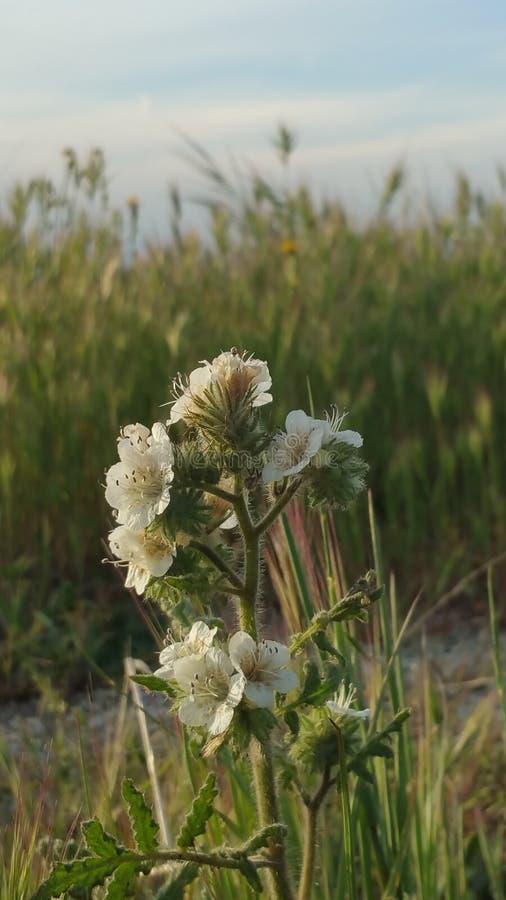 Parmi les mauvaises herbes image stock