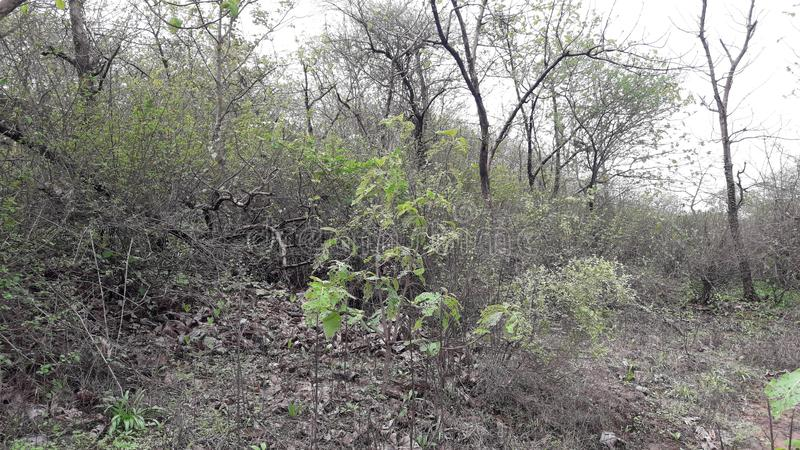 Parnera kulleskog i valsad Gujarat Indien 'beauti av valsad ', arkivfoto