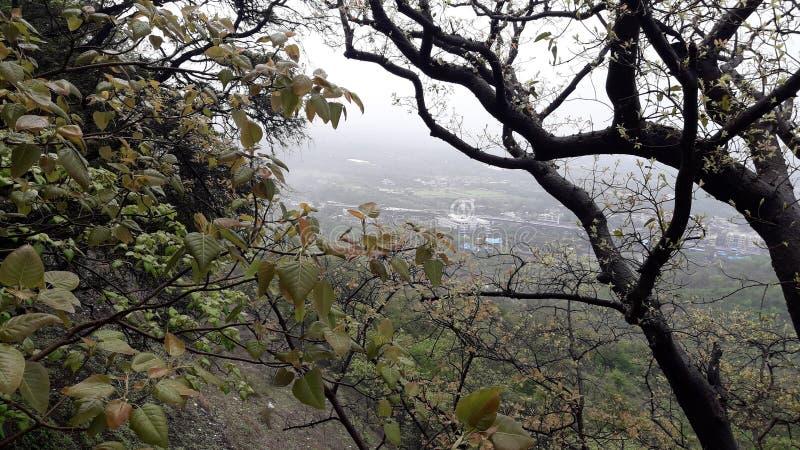 Parnera kulleskog i valsad Gujarat Indien 'beauti av valsad ', fotografering för bildbyråer