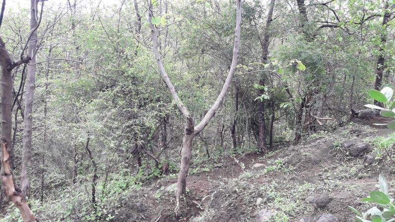 Parnera wzgórza las w valsad Gujarat India «valsad «beauti obraz stock