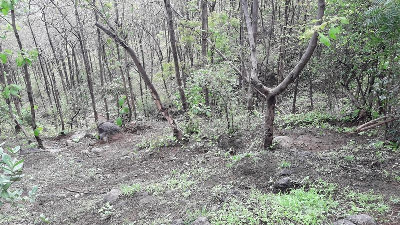 Parnera wzgórza las w valsad Gujarat India «valsad «beauti zdjęcia royalty free