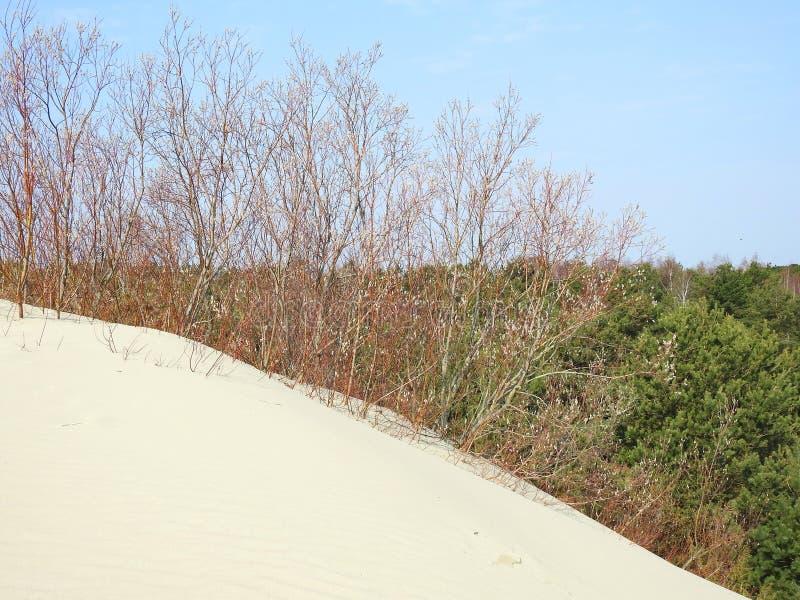 Parnidis dunes in Neringa, Lithuania royalty free stock images