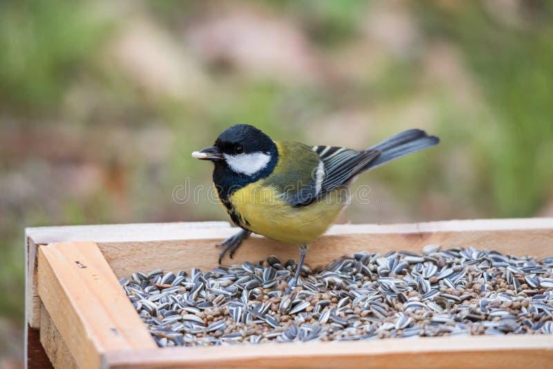 Paro carbonero en una tabla del pájaro con la semilla imagen de archivo libre de regalías