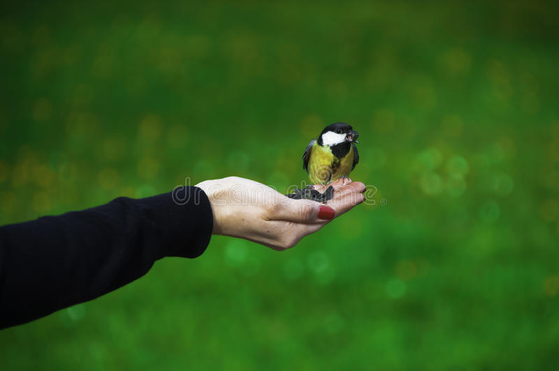 Paro del pájaro fotos de archivo libres de regalías