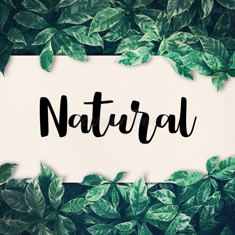 Parola naturale con la foglia verde amichevole, ambiente di eco, concetto fotografia stock