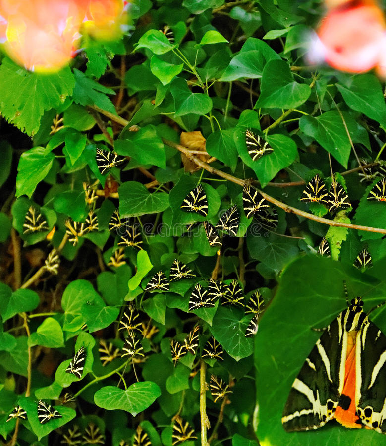 Paros Valley Of Butterflies Royalty Free Stock Photo