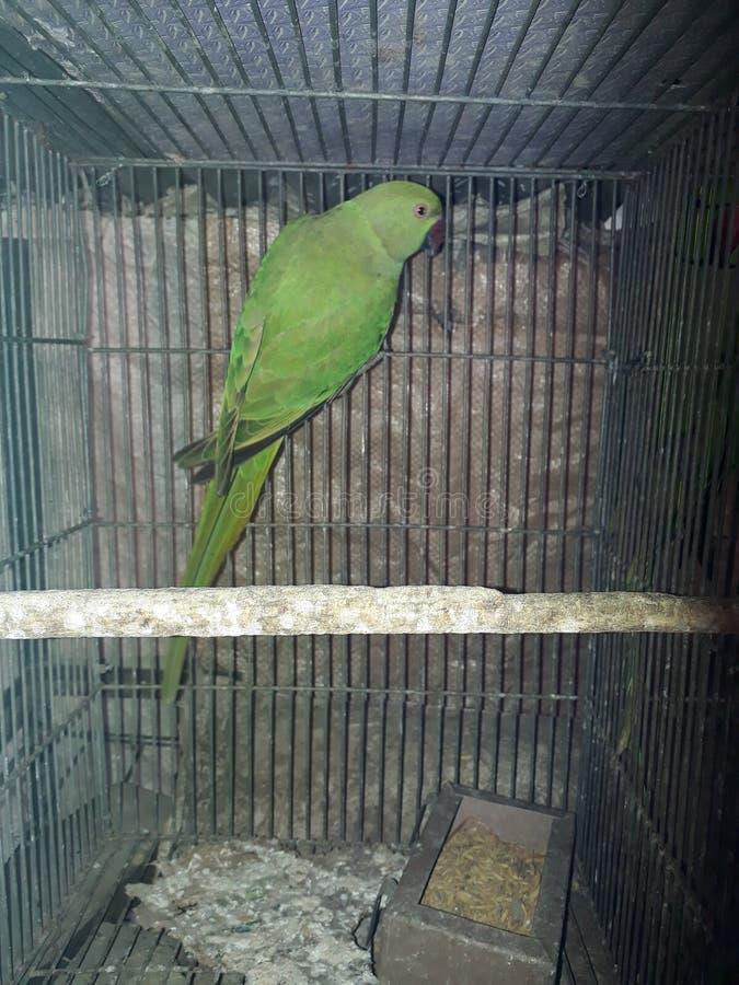 Parot鸟 库存照片