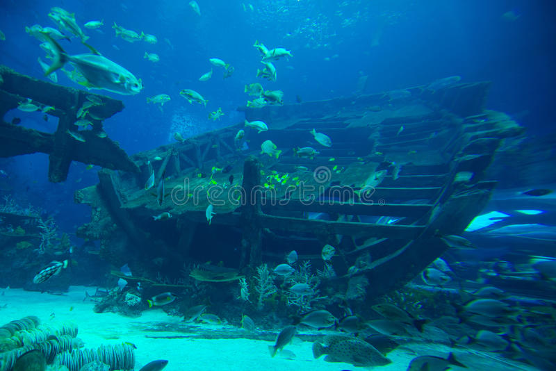 Parowozowy pokój shipwreck fotografia stock