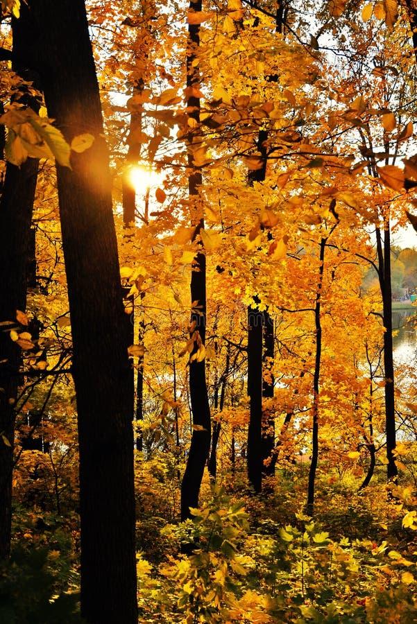 Parque admitido de Tsaritsyno de la foto de color del bosque del otoño en Moscú imágenes de archivo libres de regalías