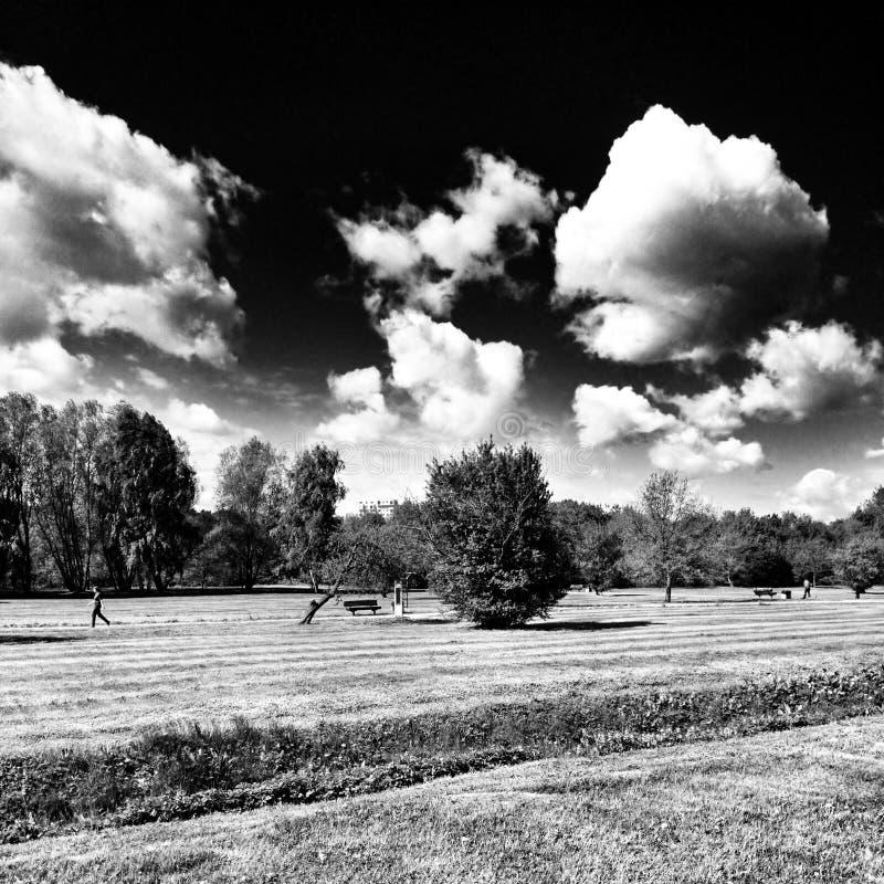 Parque al aire libre Mirada artística en blanco y negro fotografía de archivo