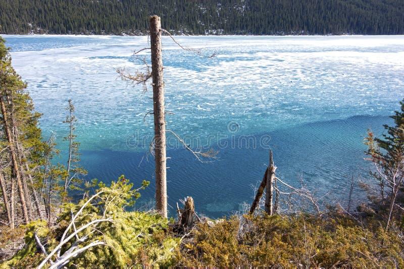 Parque azul isolado de Forest Canadian Rockies Banff National da água do lago glacier do gelo da árvore estéril imagens de stock