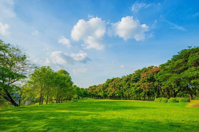 Parque bonito da cena do parque em público com campo de grama verde, gree foto de stock