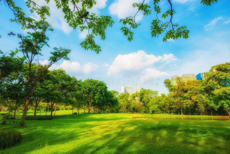 Parque bonito da cena do parque em público com campo de grama verde, gree fotografia de stock