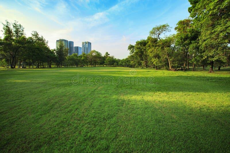 Parque bonito da luz da manhã em público com campo de grama e gree imagem de stock