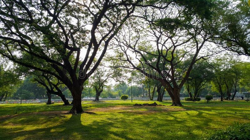 Parque bonito da luz da manhã em público com campo de grama verde e a planta fresca verde da árvore imagem de stock