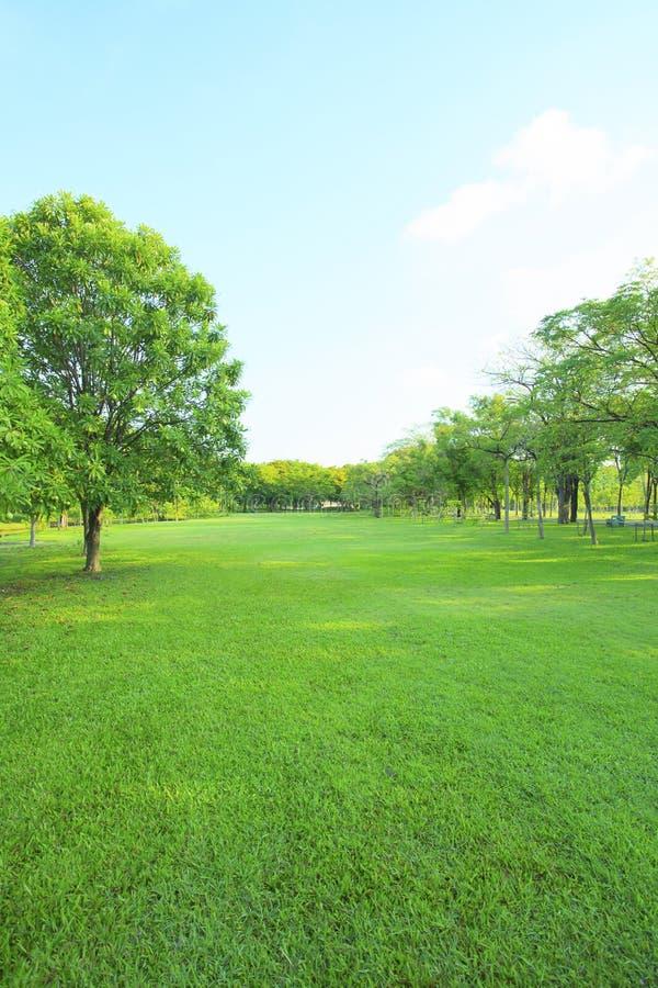 Parque bonito da luz da manhã em público com o campo de grama verde foto de stock