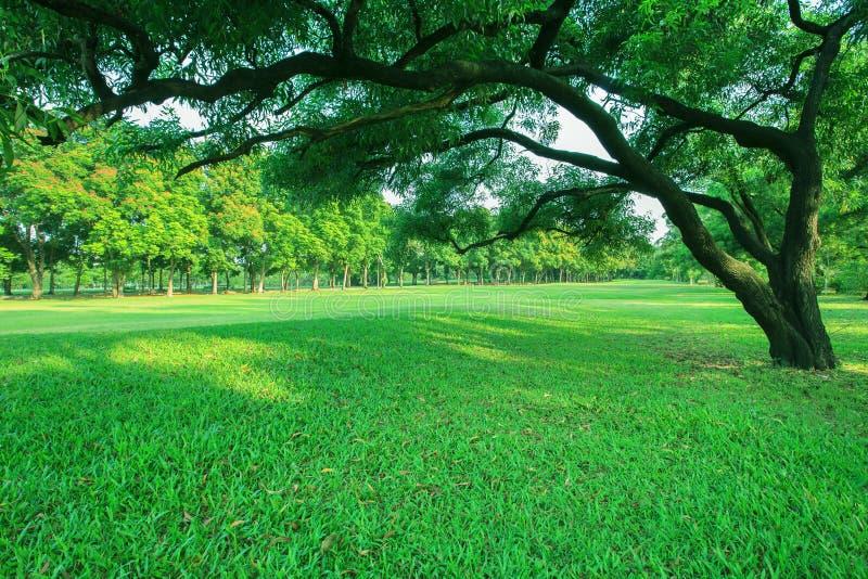 Parque bonito da luz da manhã em público com o campo de grama verde imagens de stock royalty free