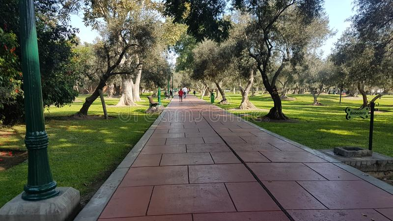 Parque bonito de Olivar da manhã fotografia de stock