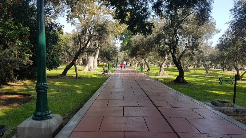 Parque bonito de Olivar da manhã fotos de stock