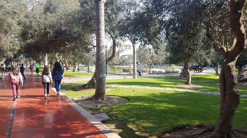 Parque bonito de Olivar da manhã fotos de stock royalty free