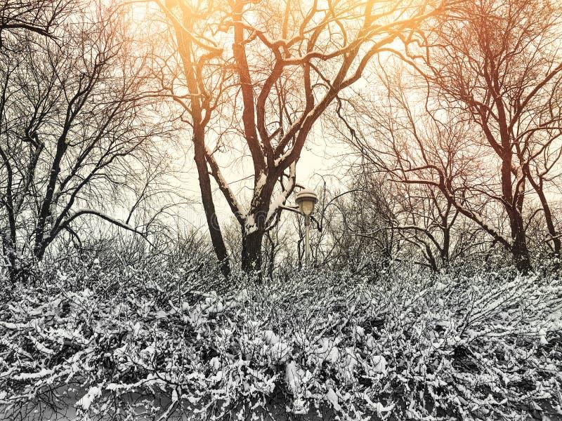 Parque bonito do inverno no por do sol imagens de stock