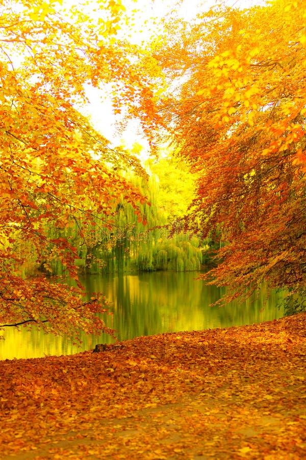 Parque bonito do outono Paisagem outonal fotografia de stock