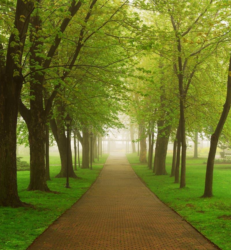 Parque brumoso fotografía de archivo