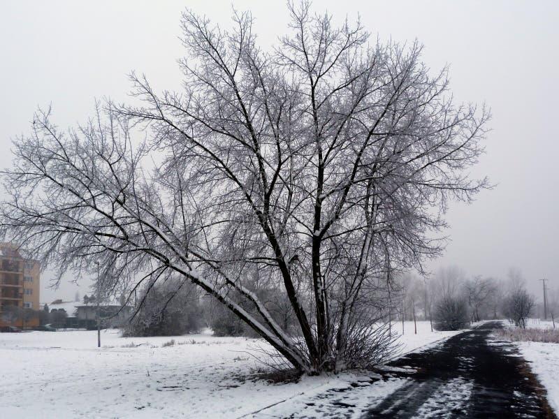 parque coberto de neve do inverno, fundo obscuro e estrada asfaltada preta na perspectiva foto de stock royalty free
