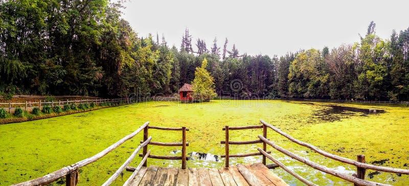 Parque colombiano bonito com um lago curvado das folhas fotografia de stock