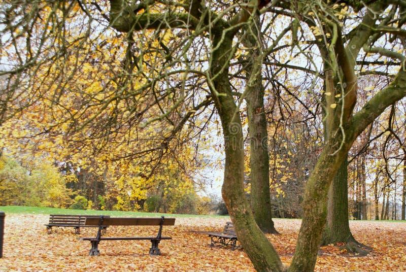 Parque colorido bonito do outono em um dia ensolarado Parc Astrid imagens de stock royalty free