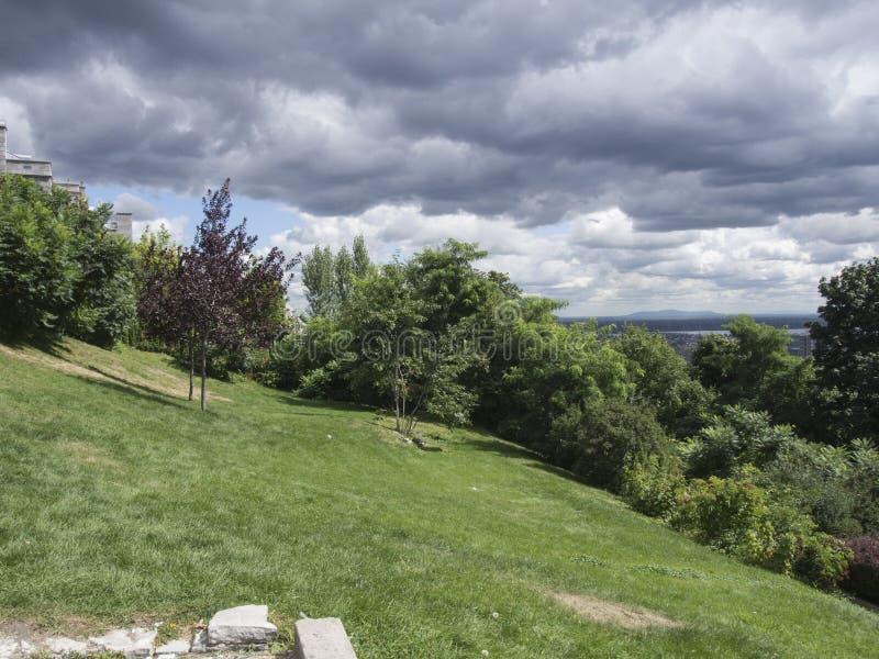 Parque com árvores e céus fotografia de stock royalty free