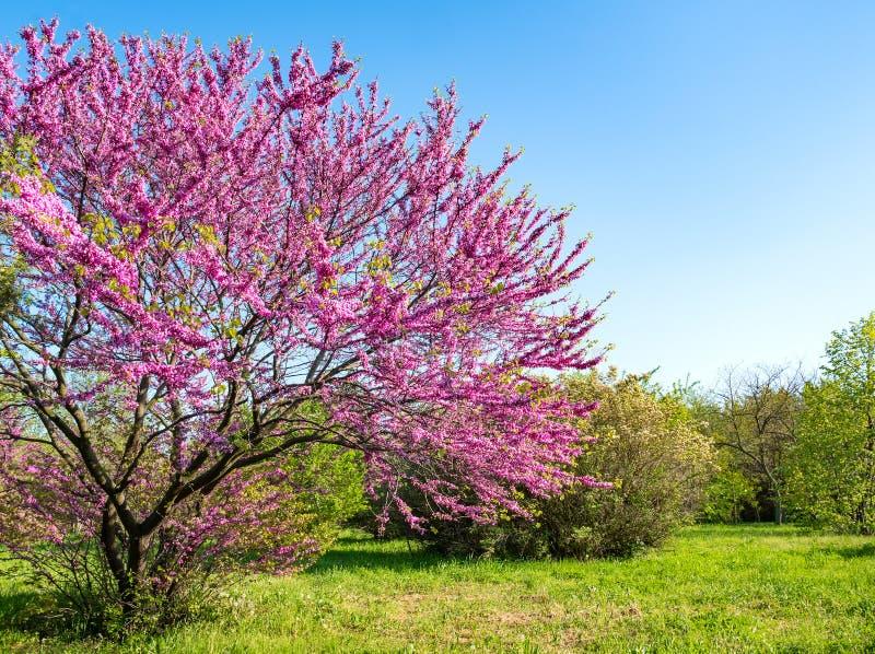Parque con los árboles florecientes y la hierba verde Fondo de la naturaleza del resorte imagen de archivo