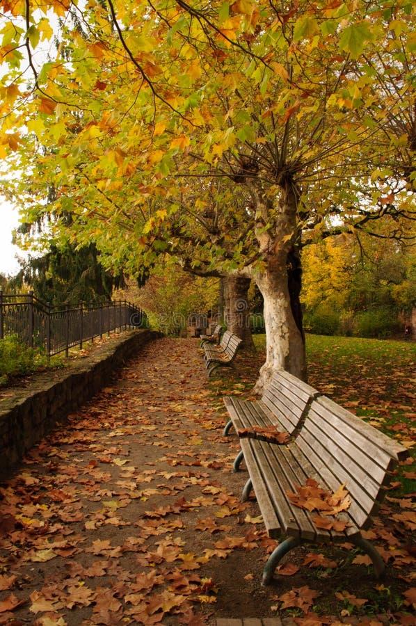 Parque con los bancos en otoño fotografía de archivo
