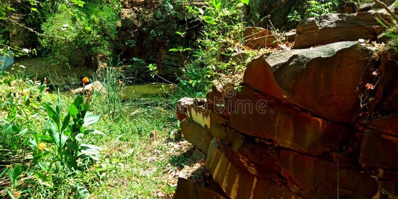 Parque da água com a lagoa atrativa das flores das rochas do ambiente verde bonito das plantas fotografia de stock