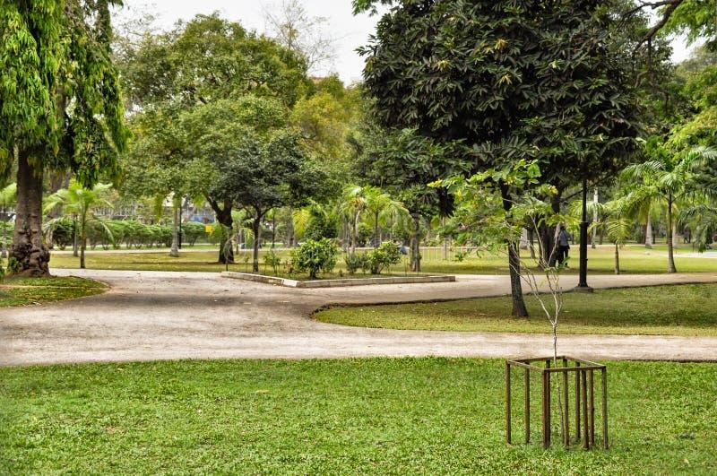Parque da cidade com hortaliças exuberantes com plântulas da árvore imagem de stock royalty free
