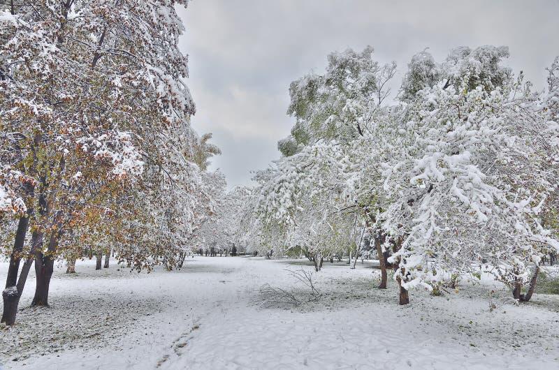 Parque da cidade do outono sob a primeira neve fotos de stock royalty free