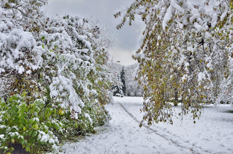 Parque da cidade do outono sob a primeira neve fotografia de stock royalty free