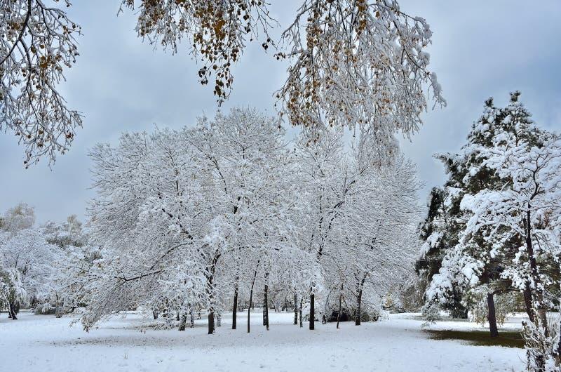 Parque da cidade do outono sob a primeira neve macia fotografia de stock