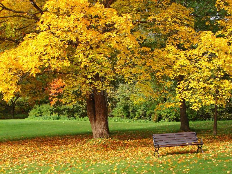 Parque da cidade no outono fotografia de stock royalty free