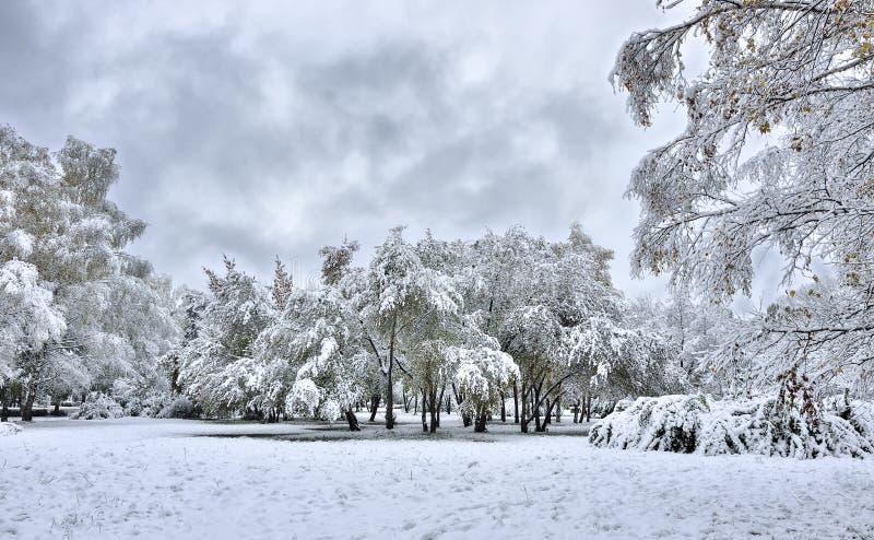 Parque da cidade no outono após a primeira queda de neve fotos de stock royalty free