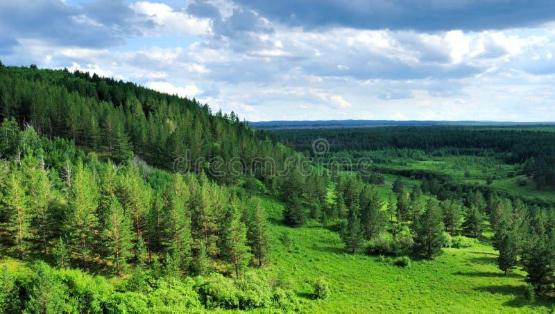 Parque da floresta em Inner Mongolia imagens de stock royalty free
