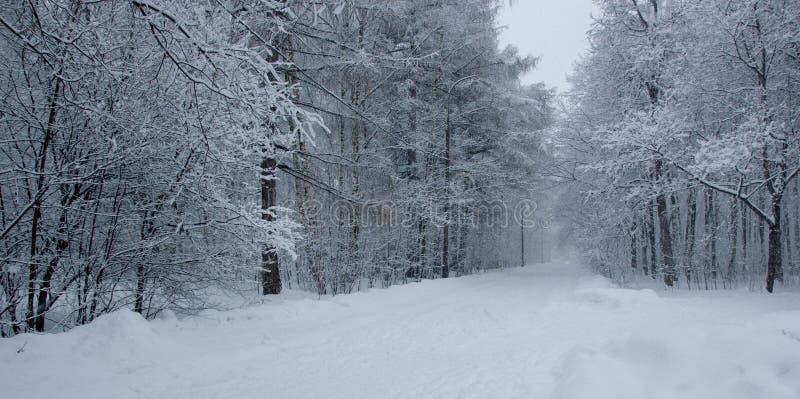 Parque da neve imagens de stock