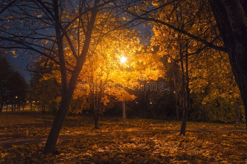 Parque da noite fotos de stock royalty free