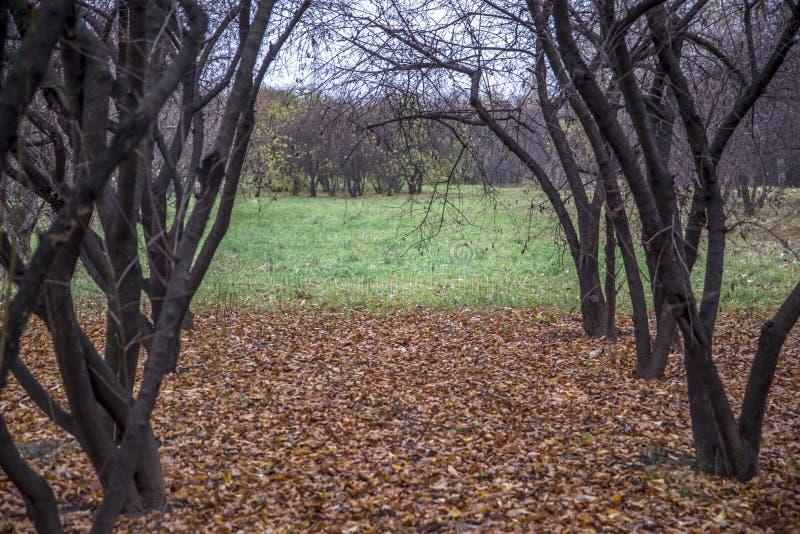 Parque de Autumn Landscape fotos de stock royalty free