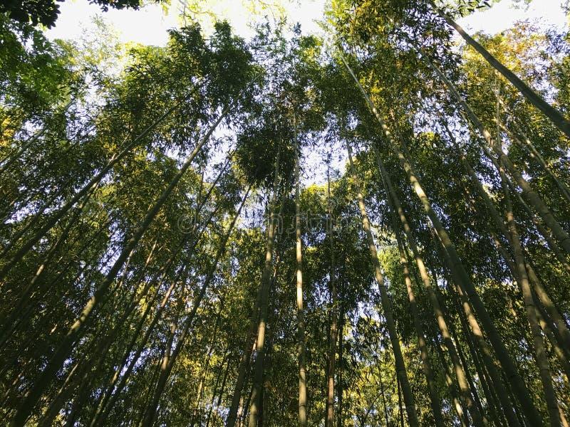 Parque de bambu fotografia de stock royalty free