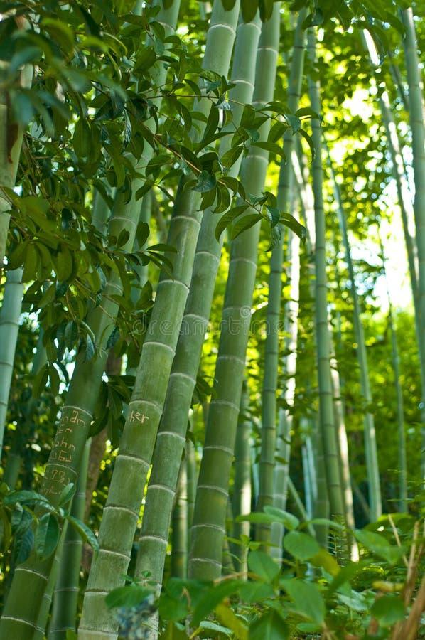 Parque de bambu do bosque imagem de stock