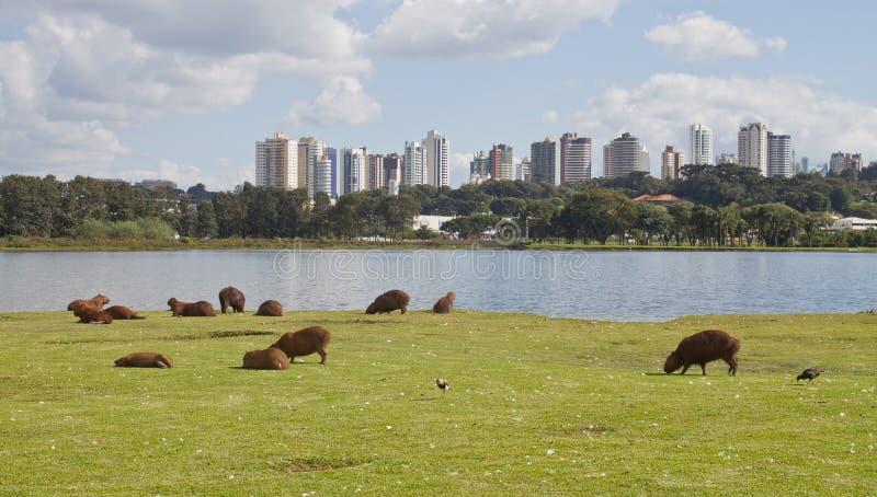Parque de Barigui foto de archivo libre de regalías