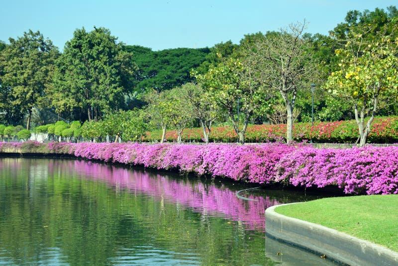 Parque de Benjakitti en Bangkok fotografía de archivo libre de regalías