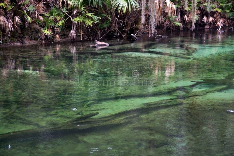 Parque de estado azul de la primavera, la Florida, los E.E.U.U. fotografía de archivo