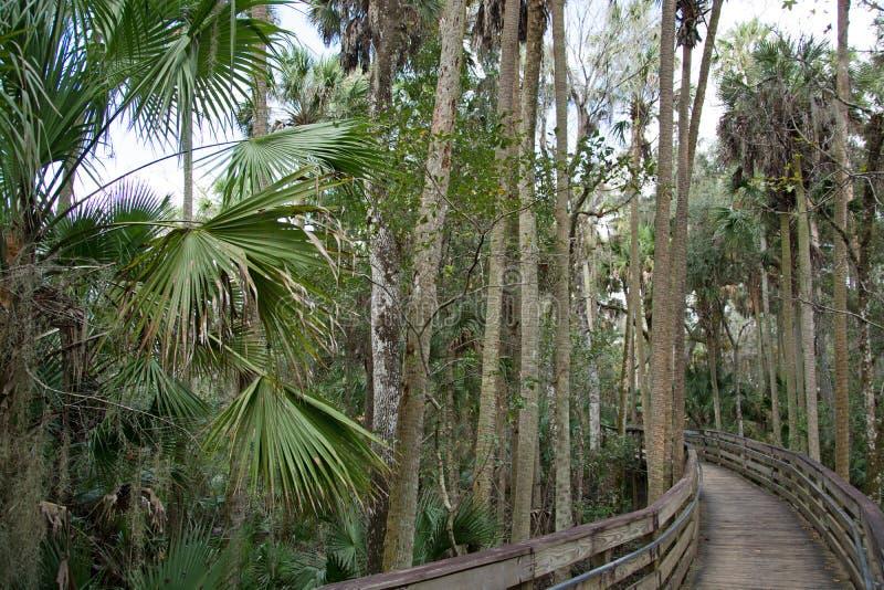 Parque de estado azul de la primavera, la Florida, los E.E.U.U. foto de archivo libre de regalías